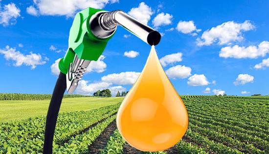 El biodiesel de algas podría ser la mejor opción para sustituir al gasoil